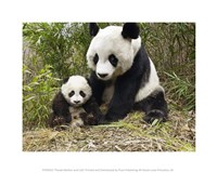Panda Mother and Cub Framed Print
