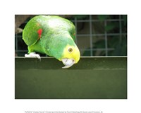 Cheeky Parrot - various sizes, FulcrumGallery.com brand