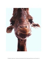 "8"" x 10"" Giraffe Pictures"