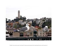"""10"""" x 8"""" San Francisco Art"""
