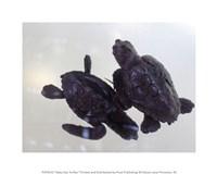 Baby Sea Turtles - various sizes, FulcrumGallery.com brand