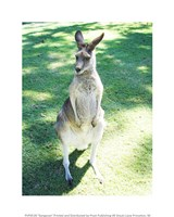 Kangaroo In Field Fine Art Print