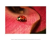Ladybug On Leaves - various sizes