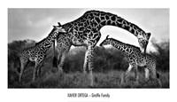 Giraffe Family Fine Art Print
