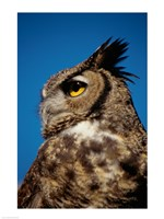 Horned Owl Profile - various sizes