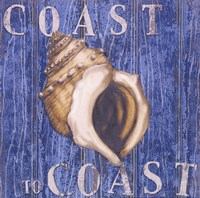 "Coastal USA Conch by Paul Brent - 12"" x 12"""