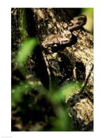Close-up of a snake on the branch of a tree - various sizes