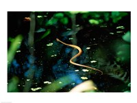 Snake in the water - various sizes