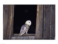 Barn Owl Left Side - various sizes, FulcrumGallery.com brand