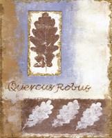 Leaf IV Fine Art Print