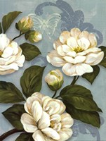 Camellias Framed Print
