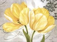 Colori Yellow II Framed Print