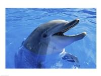 Dolphin Sea World San Diego California