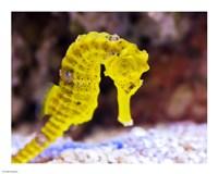 Birch Aquarium - various sizes, FulcrumGallery.com brand