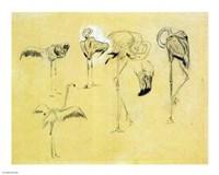 Flamingo Study - various sizes
