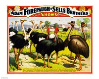 Great Birds of the World, Poster 1898 Fine Art Print