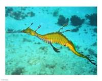 Sea Horse - Yellow - various sizes