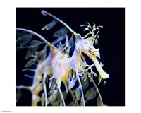 Seahorse Photograph - various sizes - $12.99