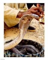 Snake in a Basket - various sizes