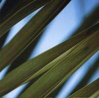 Palma IV Framed Print