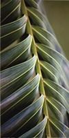 """Palma II by Susan Bryant - 12"""" x 24"""""""