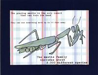 "Did You Know - Praying Mantis by Serena Bowman - 14"" x 11"""