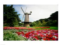 Low angle view of a windmill in a park, Golden Gate Park, San Francisco, California, USA Fine Art Print