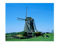 Windmill and Cows, Wilsveen, Netherlands Photograph - various sizes