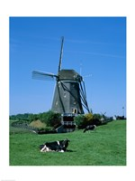 Windmill and Cows Wilsveen Netherlands