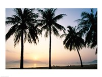 Silhouette of palm trees on a beach during sunrise, Nha Trang Beach, Nha Trang, Vietnam Fine Art Print