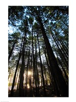 Low angle view of trees in a forest at sunrise - various sizes