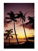 Silhouette of palm trees at sunset, Kauai, Hawaii, USA Fine Art Print