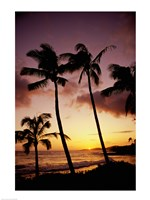 Silhouette of palm trees at sunset, Kauai, Hawaii, USA Fine Art Print