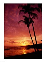 Silhouette of palm trees at sunset, Kauai, Hawaii, USA Framed Print