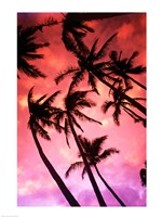 Kauai Hawaii Palm Tree Silhouette Sunset - various sizes