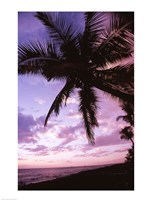 Kauai Hawaii USA Palm Tree Fine Art Print
