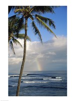 Kauai Hawaii - Palm Tree Fine Art Print