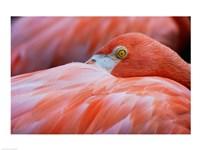Flamingo Hiding Face - various sizes