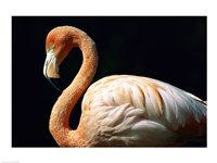 Pink Flamingo - various sizes