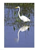 Reflection of a Great Egret in Water Fine Art Print