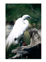Egret - various sizes