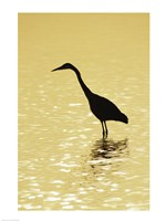 Great Egret in the water Fine Art Print
