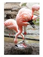 Flamingo in Stassbourg - various sizes