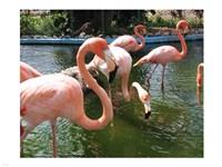 Flamingos in a Zoo - various sizes - $29.99