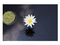 Lotus Yin-Yang Fine Art Print