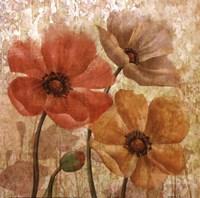 Poppy Allure I Framed Print