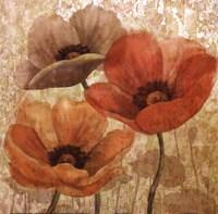 Poppy Allure II Fine Art Print