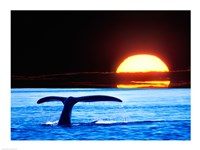 Tail fin of a whale in the sea Framed Print