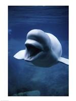 White Whale - various sizes