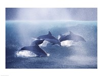 Dolphins - various sizes
